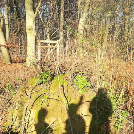 3 Schatten im Wald
