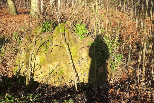 Schatten in Waldlandschaft